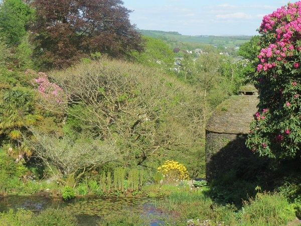 Gardens at Cotehele House