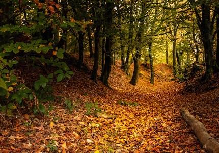Autumn in Devon